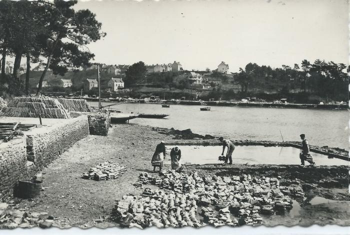 Travail autour d'un bassin vers 1950